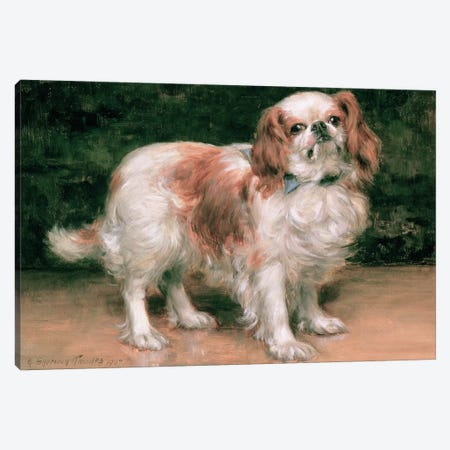 King Charles Spaniel, 1907 Canvas Print #BMN413} by George Sheridan Knowles Art Print
