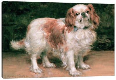 King Charles Spaniel, 1907 Canvas Art Print
