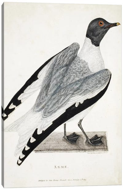 Xeme, illustration from 'A Voyage of discovery...', 1819  Canvas Art Print