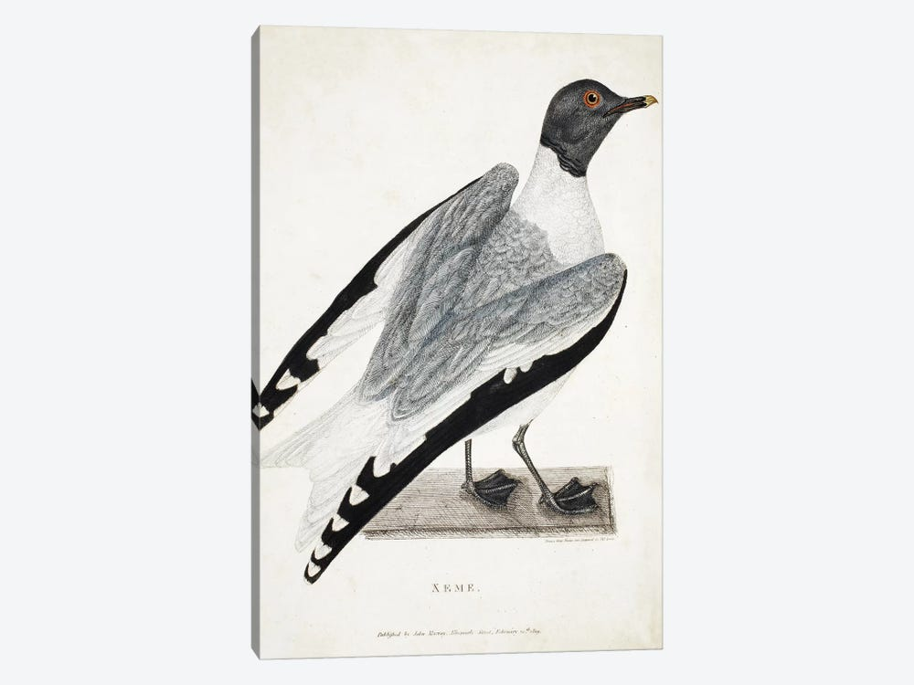 Xeme, illustration from 'A Voyage of discovery...', 1819  by Thomas Lewin 1-piece Canvas Art