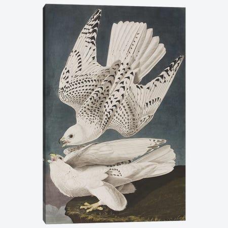 Illustration from 'Birds of America', 1827-38  Canvas Print #BMN4362} by John James Audubon Canvas Art Print