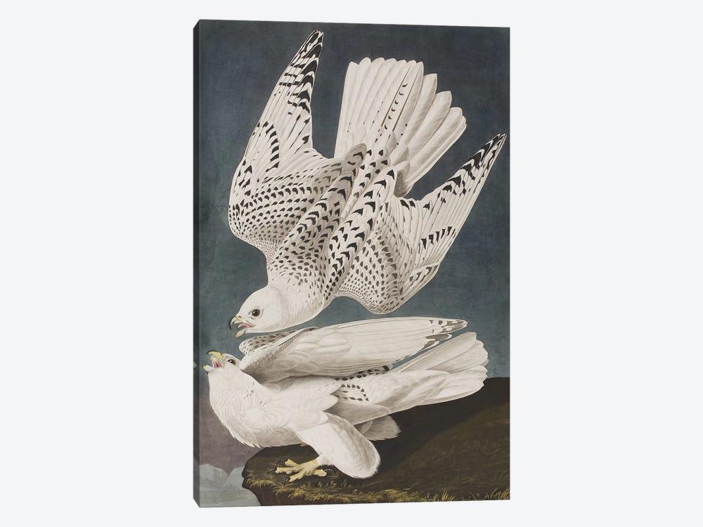 Illustration from 'Birds of America', 1827-38  by John James Audubon 1-piece Art Print