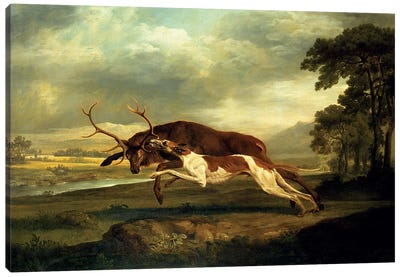 A Hound attacking a stag Canvas Art Print