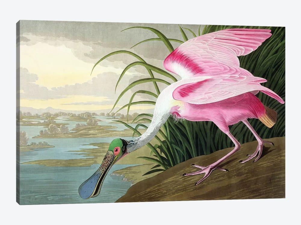 Roseate Spoonbill, Platalea leucorodia, 1836  by John James Audubon 1-piece Canvas Print
