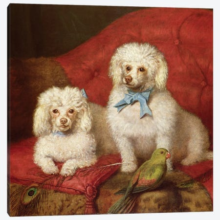 A Pair of Poodles Canvas Print #BMN448} by English School Canvas Art