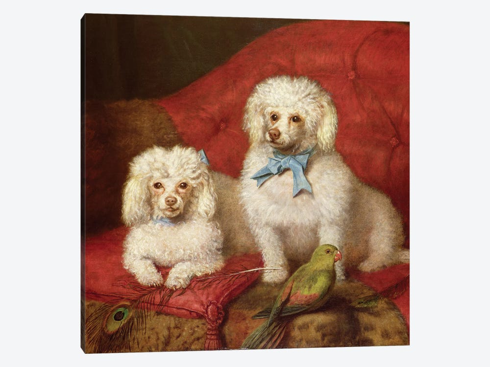 A Pair of Poodles by English School 1-piece Canvas Wall Art