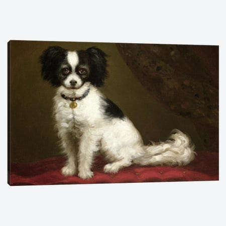 Portrait of a Spaniel Canvas Print #BMN449} by Unknown Artist Canvas Artwork