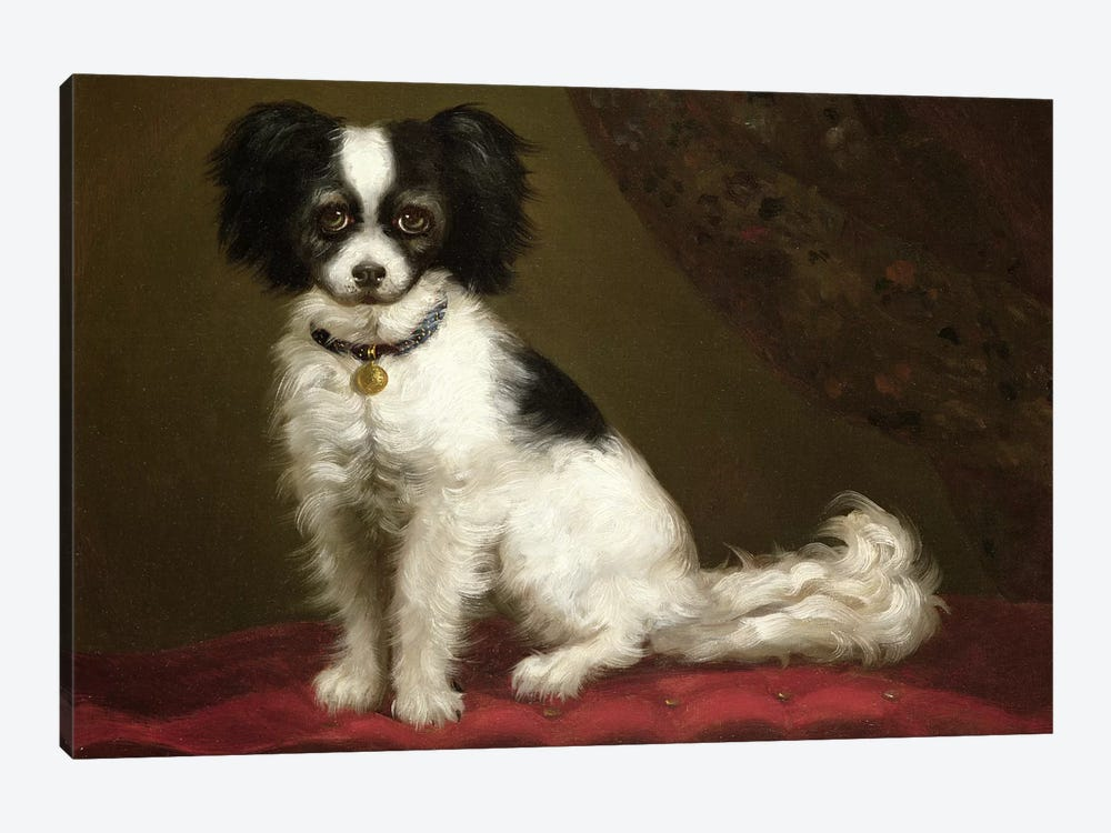 Portrait of a Spaniel 1-piece Canvas Art Print