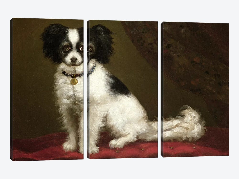Portrait of a Spaniel 3-piece Canvas Art Print