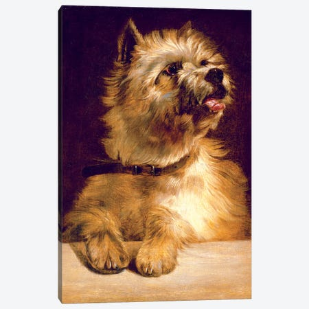 Cairn Terrier Canvas Print #BMN4524} by George Earl Canvas Artwork