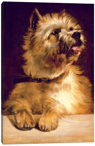 Cairn Terrier Canvas Art Print