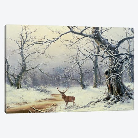A Stag in a wooded landscape Canvas Print #BMN4535} by Nils Hans Christiansen Canvas Print