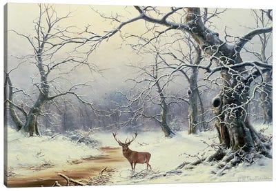 A Stag in a wooded landscape Canvas Art Print