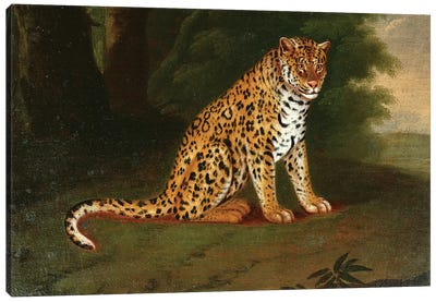 A Leopard in a landscape Canvas Art Print