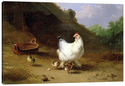 A hen with her chicks Canvas Art Print