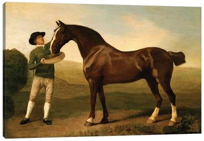 Groom feeding a bay hunter in a landscape Canvas Art Print
