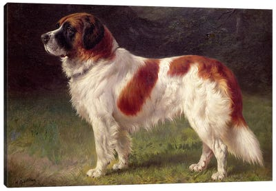 St. Bernard Canvas Art Print