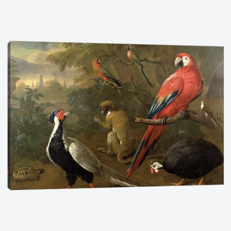 Pheasant, Macaw, Monkey, Parrots and Tortoise Canvas Print #BMN4618} by Charles Collins Canvas Print