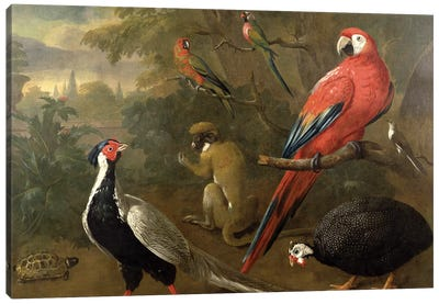 Pheasant, Macaw, Monkey, Parrots and Tortoise Canvas Art Print