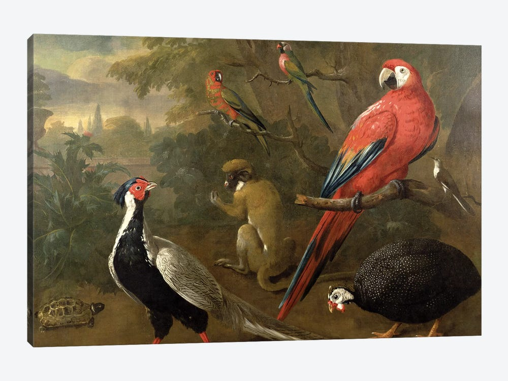 Pheasant, Macaw, Monkey, Parrots and Tortoise by Charles Collins 1-piece Canvas Art