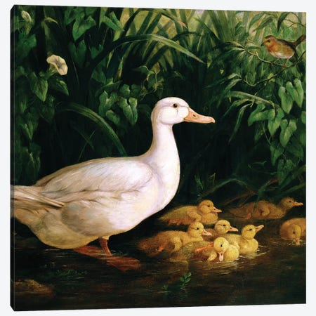 Duck and ducklings, c.1890 Canvas Print #BMN4630} by English School Canvas Print