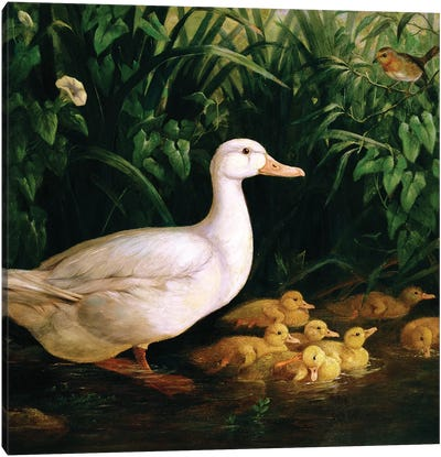 Duck and ducklings, c.1890 Canvas Art Print