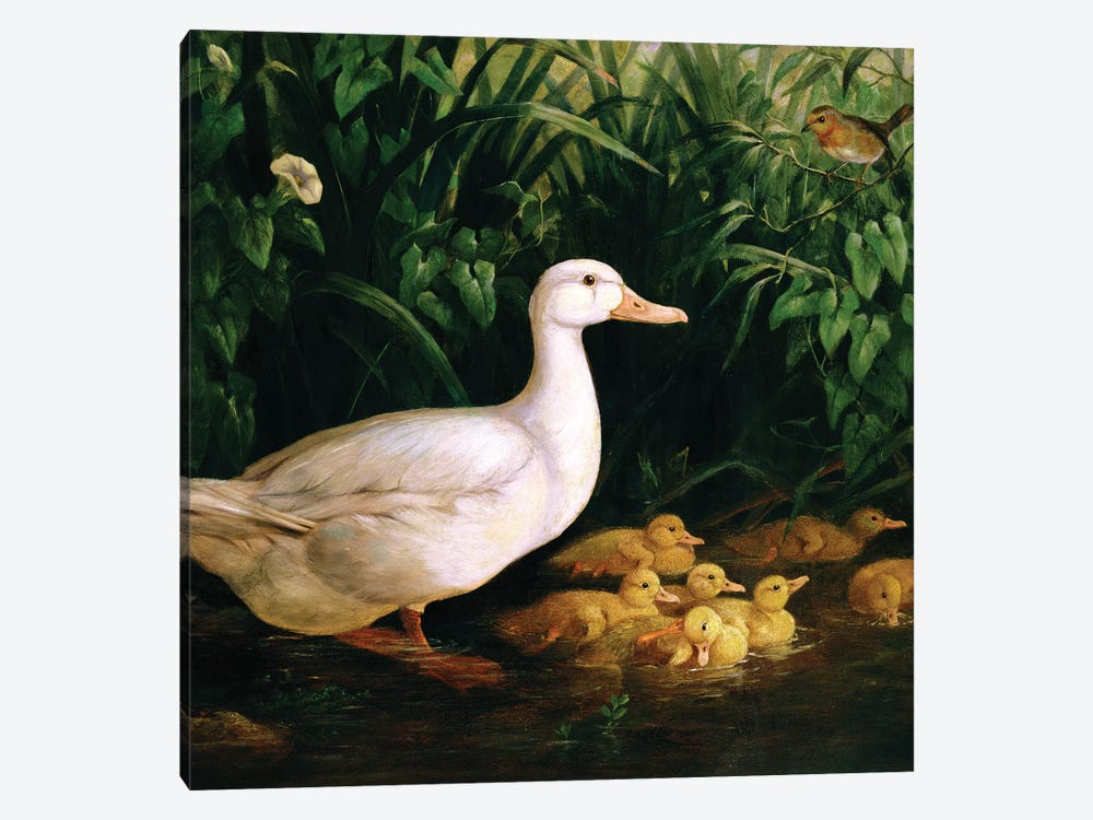Duck and ducklings, c.1890 by English School 1-piece Canvas Wall Art