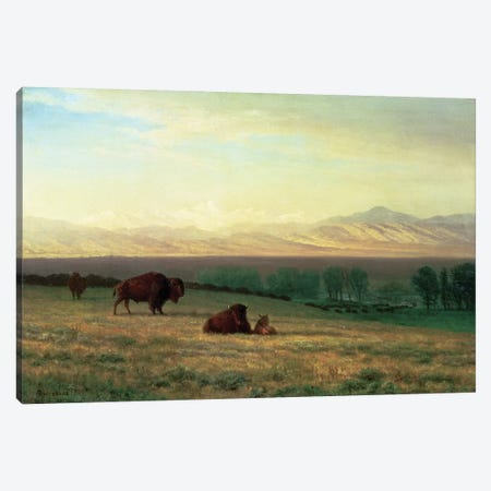 Buffalo on the Plains, c.1890  Canvas Print #BMN4635} by Albert Bierstadt Canvas Art
