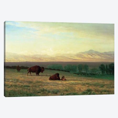 Buffalo on the Plains, c.1890  Canvas Print #BMN4635} by Albert Bierstadt Canvas Art