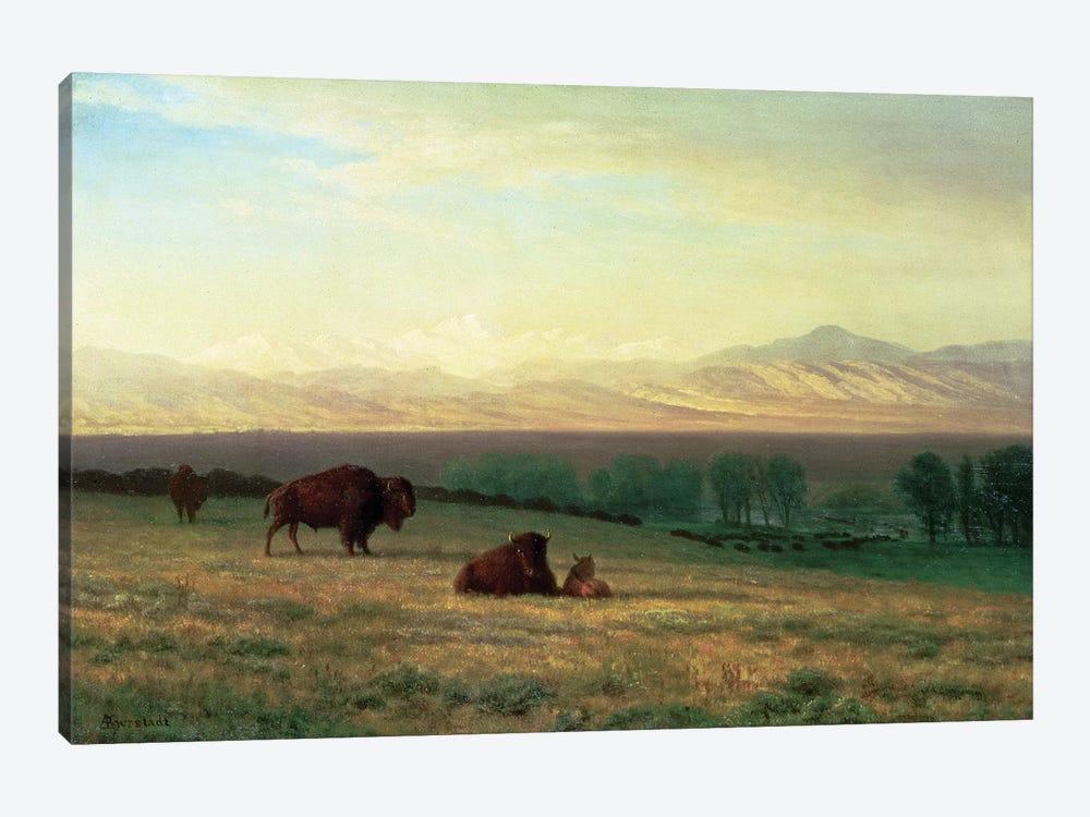 Buffalo on the Plains, c.1890  by Albert Bierstadt 1-piece Art Print