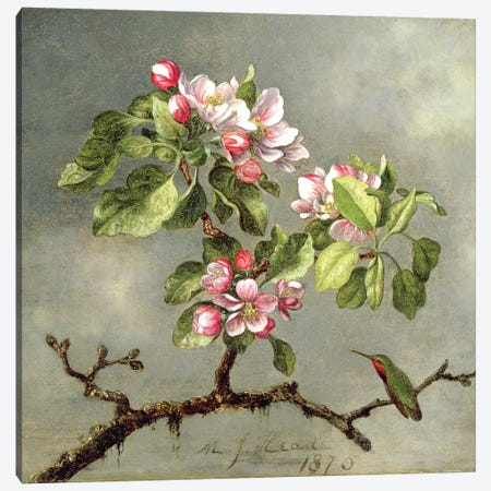 Apple Blossoms and a Hummingbird, 1875  Canvas Print #BMN4641} by Martin Johnson Heade Canvas Wall Art