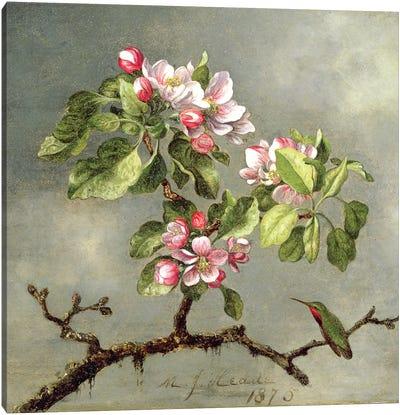 Apple Blossoms and a Hummingbird, 1875  Canvas Art Print