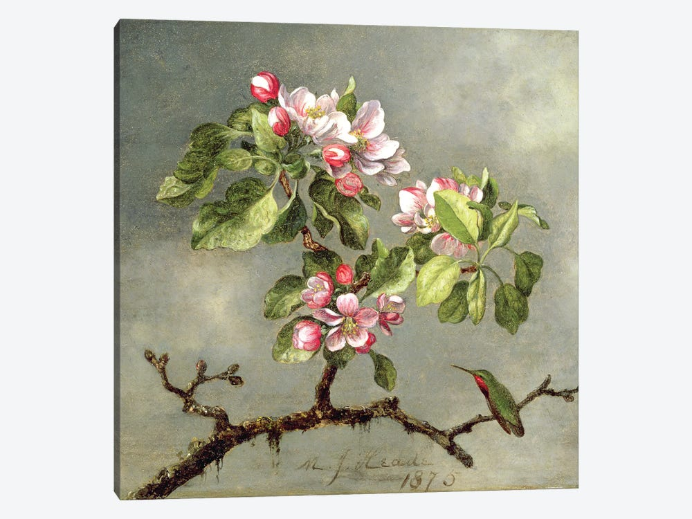 Apple Blossoms and a Hummingbird, 1875  by Martin Johnson Heade 1-piece Canvas Artwork