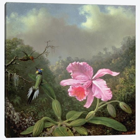 Still Life with an Orchid and a Pair of Hummingbirds, c.1890s  Canvas Print #BMN4642} by Martin Johnson Heade Canvas Artwork