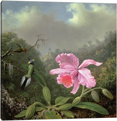 Still Life with an Orchid and a Pair of Hummingbirds, c.1890s  Canvas Art Print