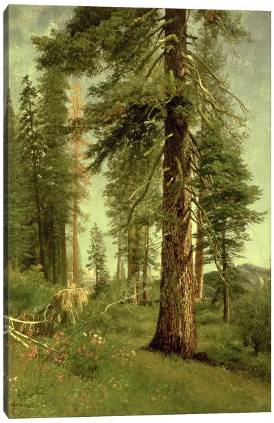 California Redwoods by Albert Bierstadt Canvas Art