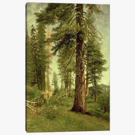 California Redwoods  3-Piece Canvas #BMN4654} by Albert Bierstadt Canvas Art