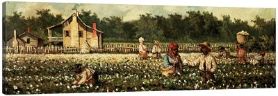 Cotton Field, Mississippi  Canvas Art Print