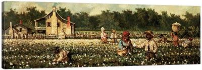 Cotton Field, Mississippi  Canvas Art Print