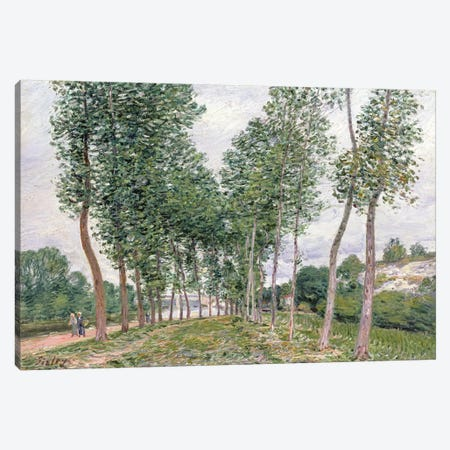 The Avenue of Poplars along the Banks of the Loing, 1892  Canvas Print #BMN4701} by Alfred Sisley Canvas Print