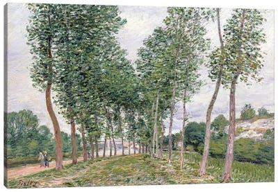 The Avenue of Poplars along the Banks of the Loing, 1892  Canvas Art Print