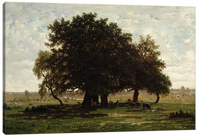 Holm Oaks, Apremont, 1850-52  Canvas Art Print