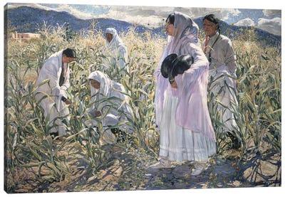 Indian corn, Taos  Canvas Art Print