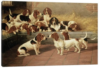 Basset Hounds in a Kennel, 1894  Canvas Art Print
