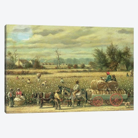 Picking Cotton  Canvas Print #BMN4760} by William Aiken Walker Art Print