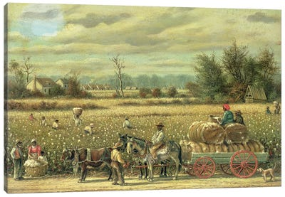 Picking Cotton  Canvas Art Print