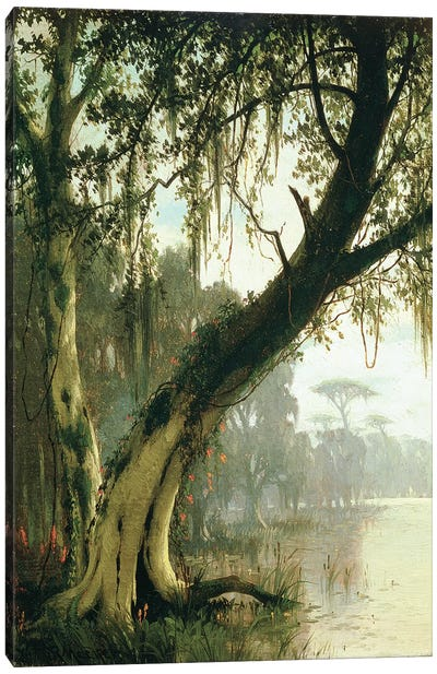 In the Bayou  Canvas Art Print