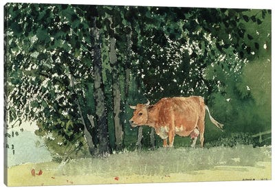 Cow in Pasture, 1878  Canvas Art Print