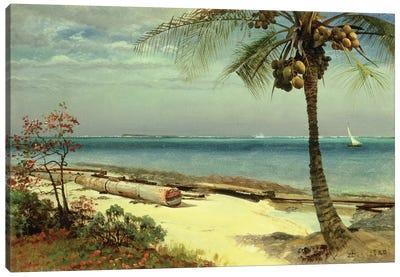 Tropical Coast Canvas Art Print