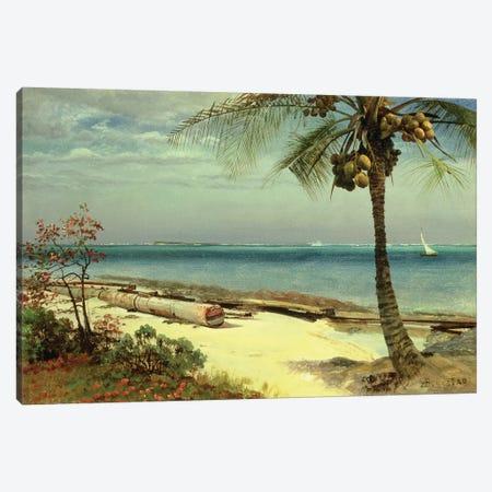 Tropical Coast Canvas Print #BMN4785} by Albert Bierstadt Canvas Artwork